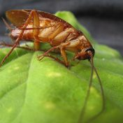 Best Tips and Treatments For Flies